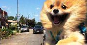 barkpost.com-ridiculous-funny-animals-car-dog-610×610