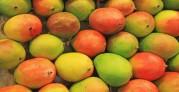 Image: mangos